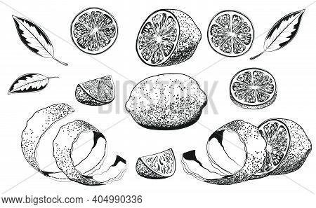 Hand Drawn Vector Illustration - Collections Of Lemons. Lemon, Slice, Leaf, Rind Peel