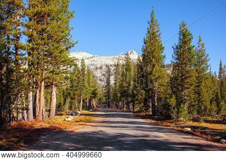 Picturesque forests and beautiful landscapes in the mountains of North America. The Tioga Road and Pass in Yosemite Park