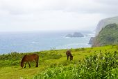 Big Island Hawaii landscape with ocean mist cost line and horses poster