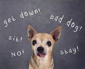 a dog in front of a chalkboard with commands written on it poster
