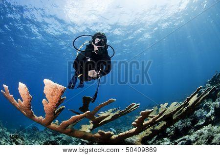 Female Scuba Diver and Coral
