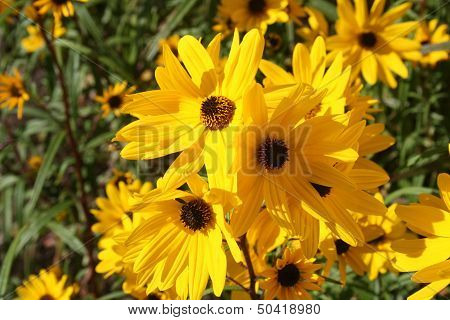 Threesome of Yellow flowers