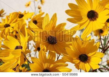 Yellow Flowers on a bright day