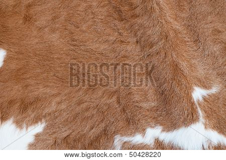 Cow hair