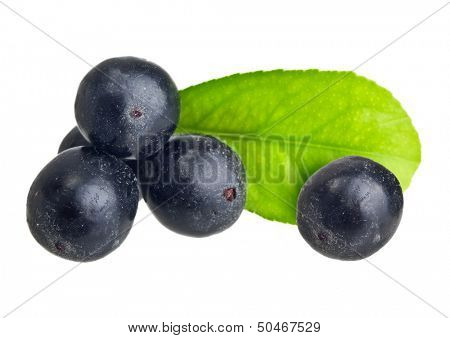 Amazon acai fruit with leaf isolated on white background.