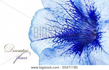 Beautiful flower close-up