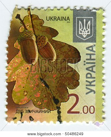 UKRAINE - CIRCA 2013: A stamp printed in Ukraine shows image of the Quercus robur (synonym Q. pedunculata) is commonly known as the English oak or pedunculate oak or French oak, circa 2013.