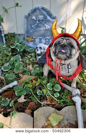 Graveyard Devil Dog