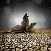 Two seals under heavy rain feeling relief after a severe drought poster