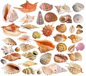 Set Of Seashell Collection on white background poster