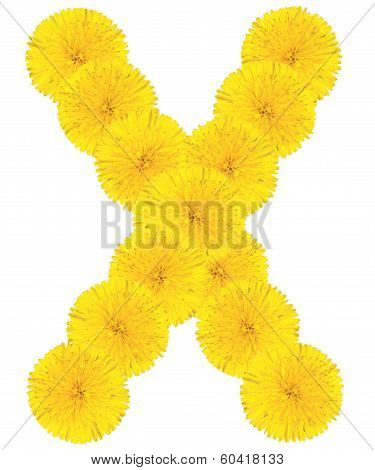 Letter X Made From Dandelions