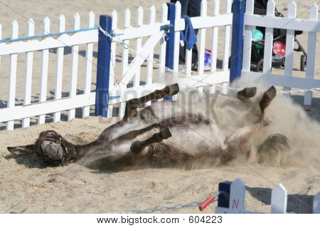 A beach donkey rolling in the sand poster