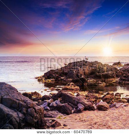 Seagulls Sit On Big  Boulders Near The Sea Watching Sunset