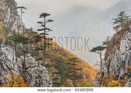 Tasnei Gorge protected area in Baile Herculane Romania poster