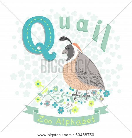 Letter Q - Quail. Alphabet with cute animals. Vector illustration. poster
