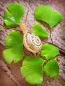 Little snail crawling on fresh green leaves, nature of the forest, slimy insect, spring time, small animal with slow speed, wild life concept poster