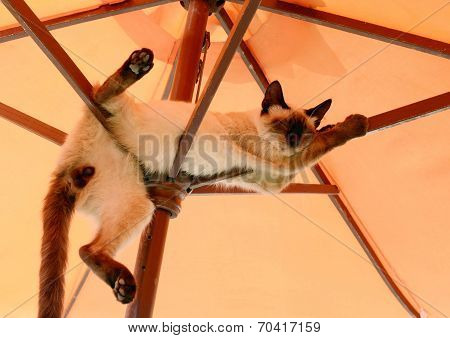 Cat Resting Under Parasol