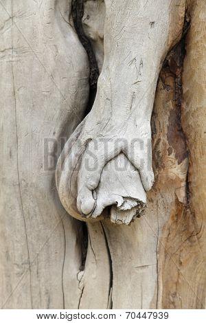 Hand The Tree