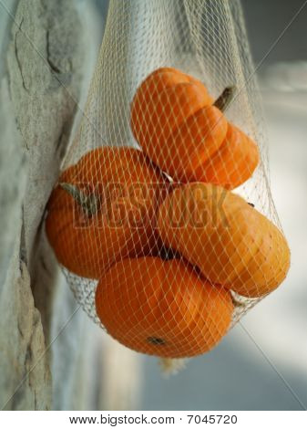 Netted Sugar Pumpkins