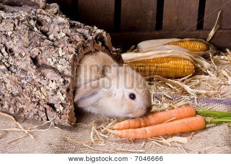 Tunnel Bunny