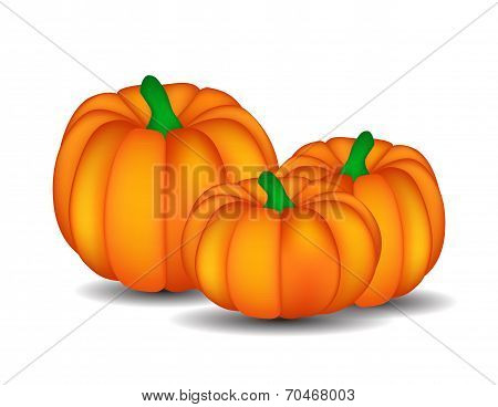Fresh Orange Pumpkin Isolated on White Background Vector Illustr