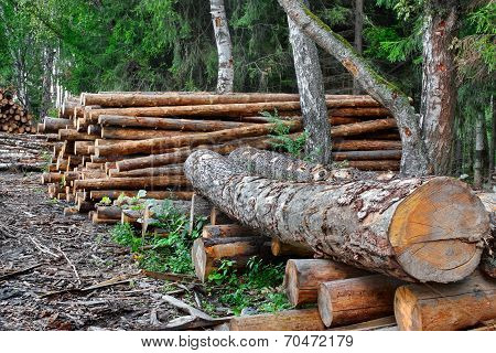 Industrial Logging