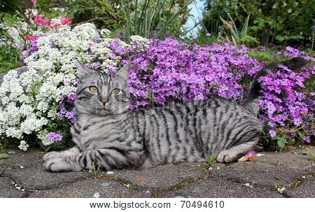 Relaxing Tabby Cat And Flowerbed