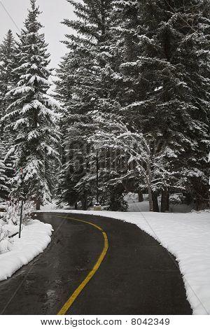 A Fresh Spring Snow Storm Brightens Everything