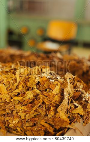 Tobacco Prepared For Production