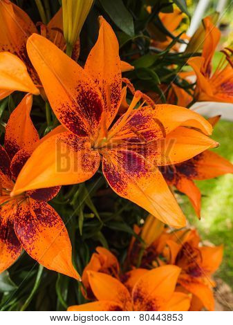 Petals, stigma and anthers of an orange lily