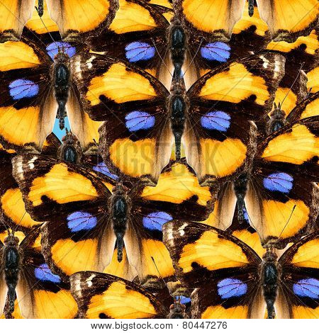 Exotic Colorful Background Made of Yellow Pansy Butterflies