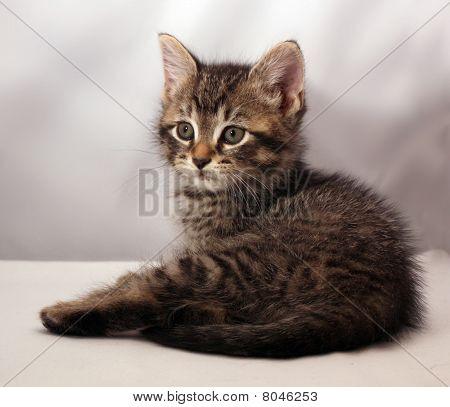 Adorable Kitten 4