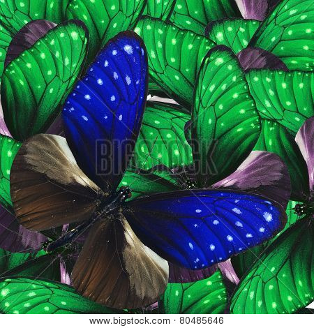 Striped Blue Crow Butterfly With Nice Green Fancy Butterflies In Nice Consolation Background Texture