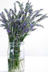 fresh lavender in glass jar on white vertical