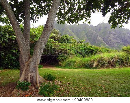 Nature Forest in Hawaii