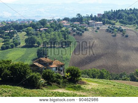 Country landscape between Jesi and Ostra (Ancona Marches Italy) at summer poster