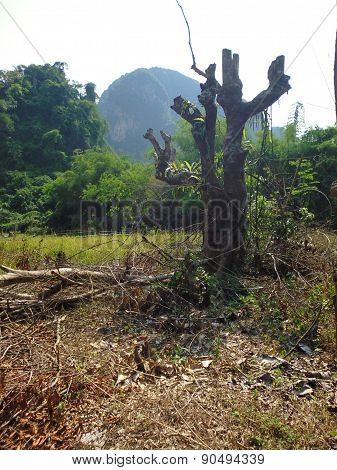 dry tree trunk with branches and stumps mountains in the background