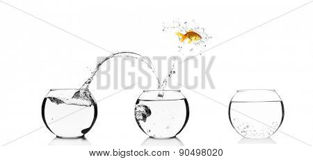 Goldfish jumping into glass aquarium, isolated on white