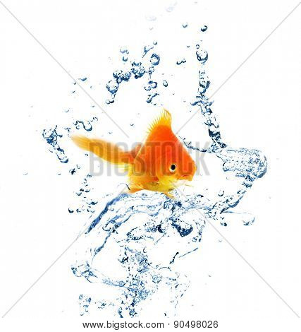 Goldfish in water splashes, isolated on white