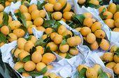 Pile of Plum Mango in local market thailand poster
