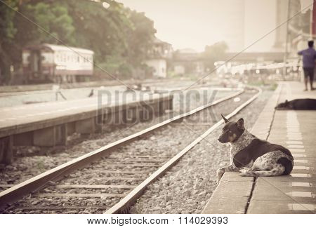 Dog Waiting For His Master To The Retro Steam Train Station