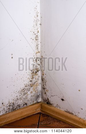 Black mold in the corner of room wall poster