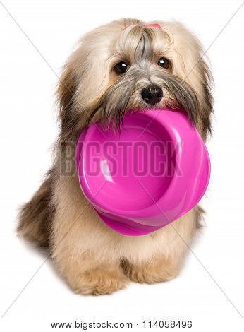 Cute hungry Bichon Havanese puppy dog is keeping an empty food bowl in her mouth - isolated on white background poster