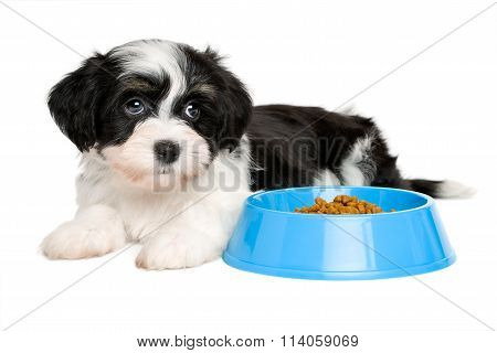 Cute havanese puppy lying next to a blue food bowl
