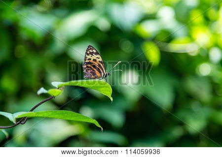 Black And Orange Butterfly Looking