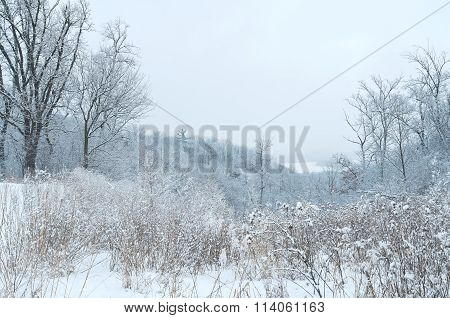 winter landscape at pine bend bluffs scientific and natural area overlooking mississippi river in inver grove heights minnesota poster