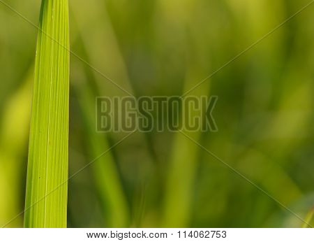 Large Grass Leaves Back-lit Forming Natural Patterns And Shapes Natural Abstract Image Produced My M