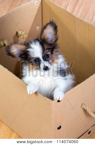 Little puppy inside a cardboard box