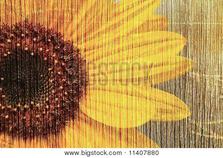 sunflower in grunge