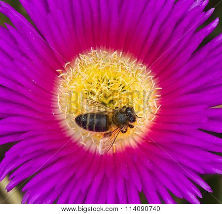 bee in the fower